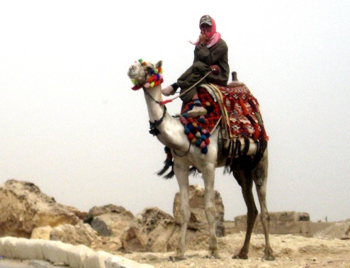 Egypt Man on Camel