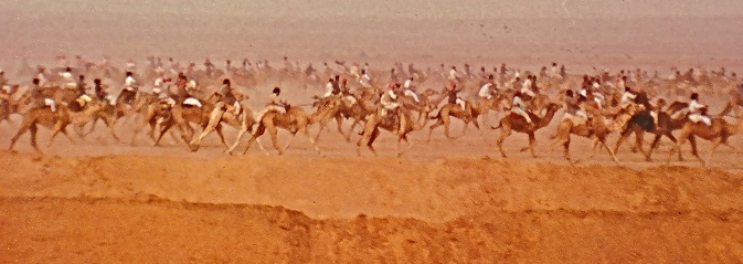 SA Camels on the Run
