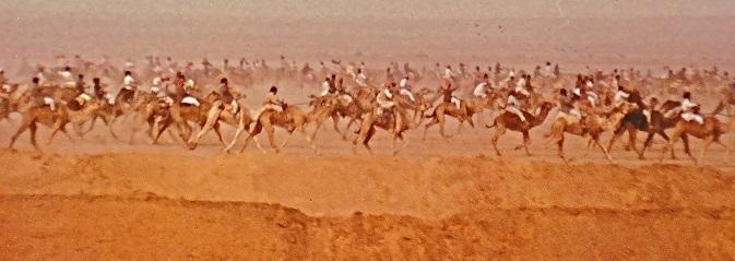 SA Camels on the Run